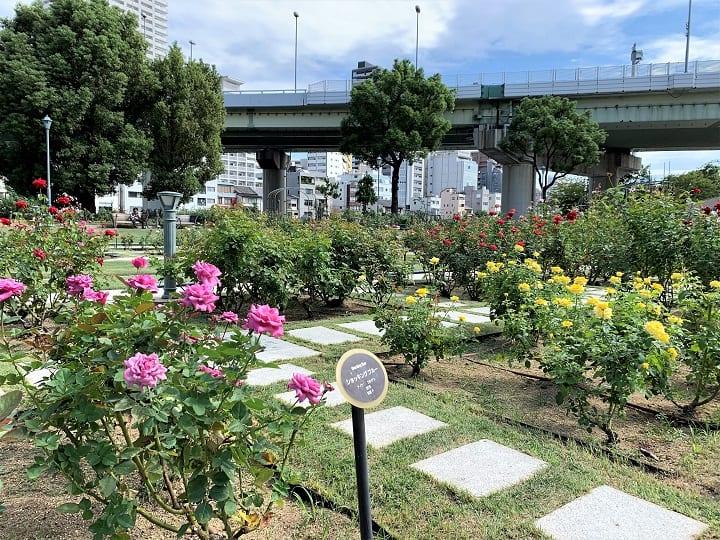 Nakanoshima Park Rose Garden, Osaka